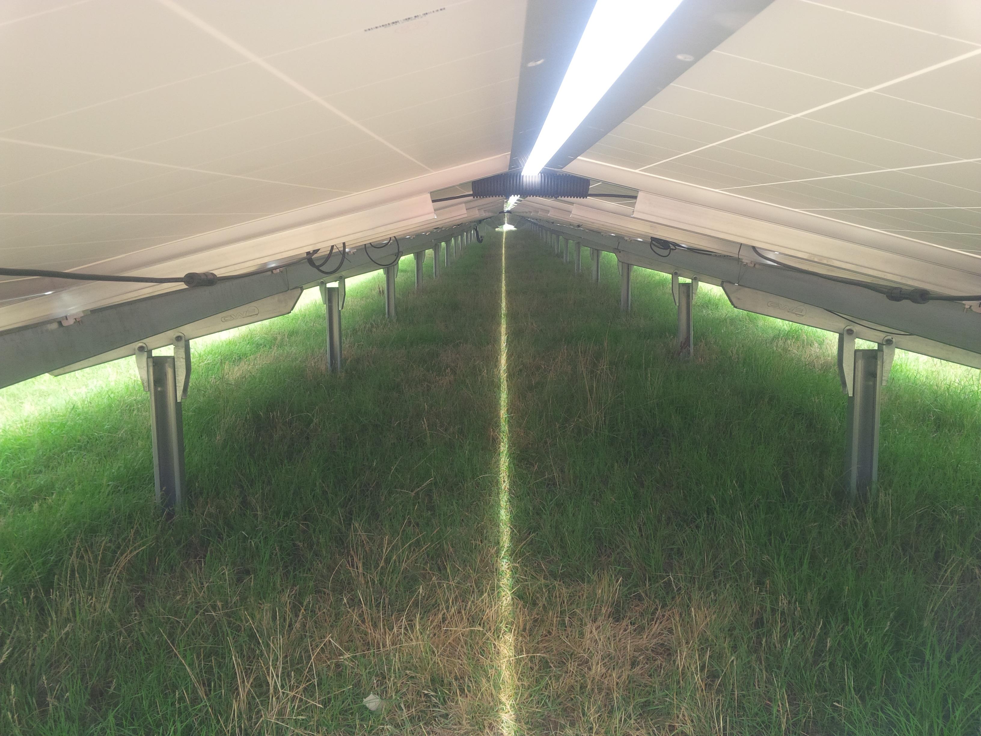 Qelle ibc Solar